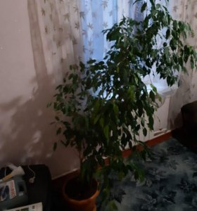 Семена  Стоимость Кисловодск Амфетамин Недорого Стерлитамак