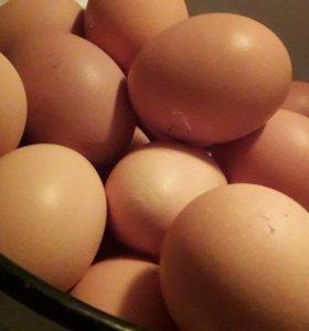 Яйцо домашнее деревенское крупное.