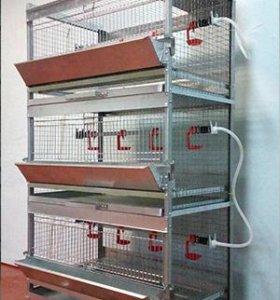 Клетки для содержания кур, перепелов и кроликов