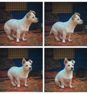 Маленькая собачка Шаня ждёт своего хозяина