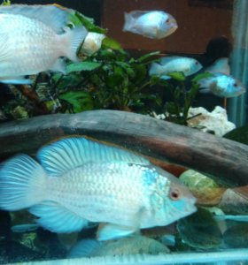 Рыбки аквариумные.