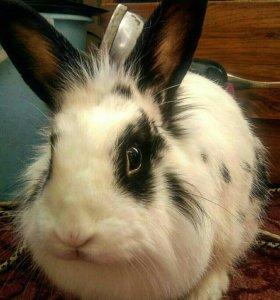 Кролик Фрося