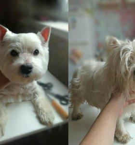 Груминг собак и кошек стрижка тримминг Ясенево