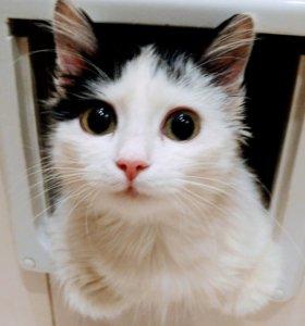 Котенок в дар:) белое волшебное котооблачко:))