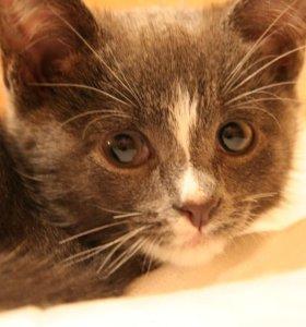 Серый мальчишка (котенок) ищет семью