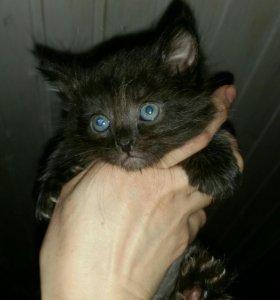 Нежные, пушистые котята ищут дом!