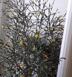 Комнатные цветы недорого