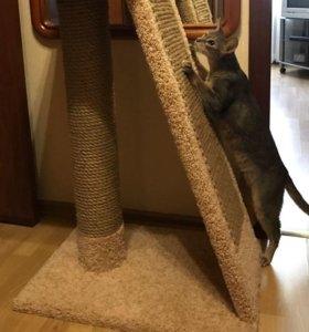 Когтеточка комплекс для кошек Хюльси