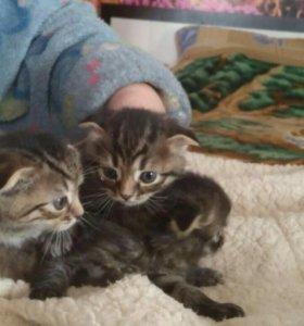 Отдам трёх котят в добрые руки .