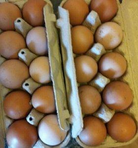 Яйца домашняя