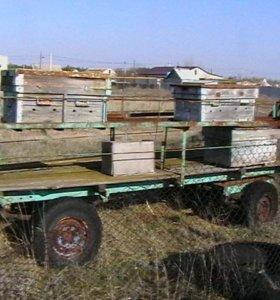 прицеп для перевозки пчел