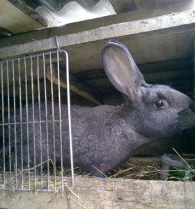 Кроль для вязки.
