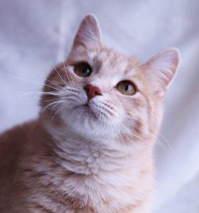 Рыжий котик в дар