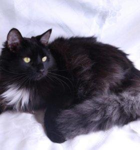 Роскошный черный кот