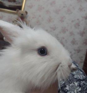 Карликовый кролик, с большим мешком сена СРОЧНО !'