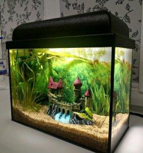 Новый аквариум с рыбками