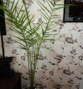 Растения не дорого