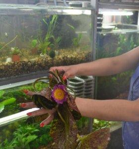 Прудовые рыбы.Прудовые растения.Все для пруда
