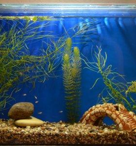 Продам новый, функционирующий аквариум.