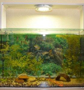 Продам новый, функционирующий аквариум на 30л.