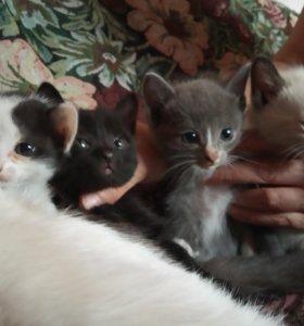 Котята - девочки, умеют кушать и приучены к лотку
