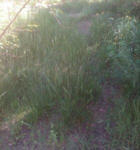 Покос травы не дорого