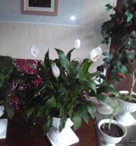 Домашние цветы разные
