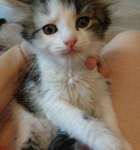 Котятки 2 месяца в хорошие руки