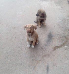 Пожалуйста помогите щенкам, у них мало времени...