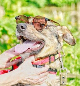 Маленькая собака из приюта в добрые руки