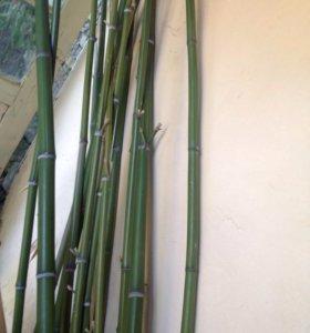 Бамбук. Для дизайна, поделок.