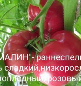 """Рассада помидор """"Турмалин"""""""