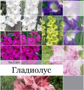 Рассада , цветы, кустарник, многолетние растения