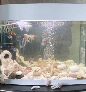 Действующий аквариум 70л