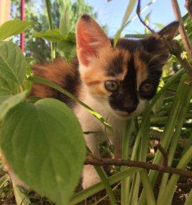 Кот, котята, кошка