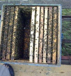 Пчелосемьи на высадку