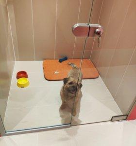 Гостиница для животных BookingDog