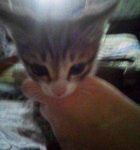 Котёнок Рома