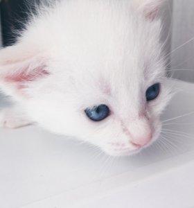 Отдадим котёнка девочку в добрые руки