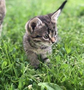 Кошечка Незабудка в добрые руки