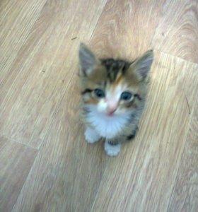 Отдам бесплатно умных,красивых,милых котят