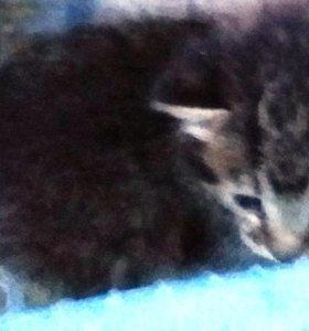 Котята 3 мес. - котик и кошечка.