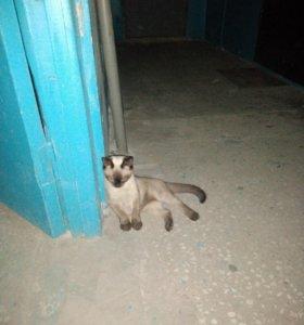Котик ищет хозяев