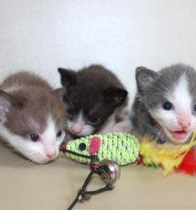 Котята. Мальчики