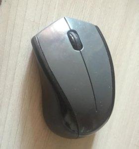 Беспородная мышь