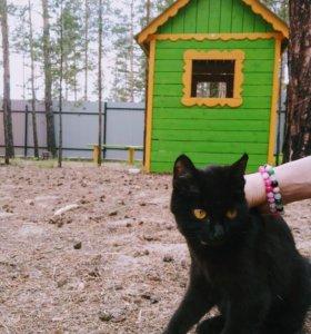 Котенок подросток даром! Доставка))