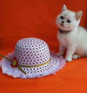 Плюшевый котик с голубыми глазами.