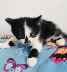 Котенок с доставкой