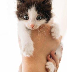 Милые котята в самые ответственные руки