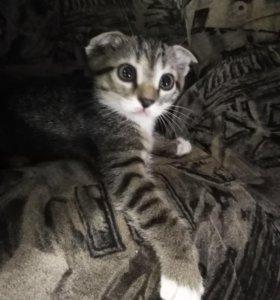 Отдаю котёнка